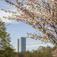 Весна :: Gennadiy Karasev