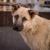 Бездомный пес :: Ольга (Кошкотень) Медведева