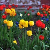 Цветы :: Liudmila Antonova