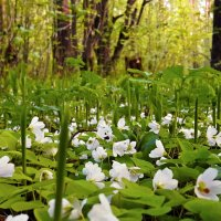 Весна, лес ожил :: Сергей Розанов