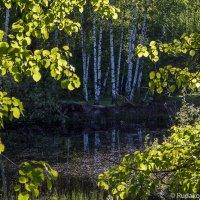 У лесного озерка :: Сергей