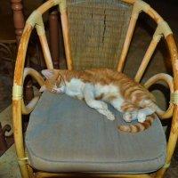 Сладкий сон в тёплый вечер... :: Sergey Gordoff