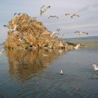 Байкал, остров Мраморный :: Надежда