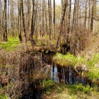 лесной ручей :: Александр Прокудин