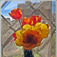 Тюльпаны :: muh5257