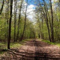 И манит вдаль в лесу дорога.. :: Андрей Заломленков