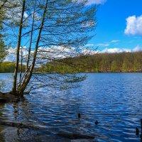 Озеро в апреле :: Valentina M.
