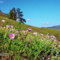 Весна :: Николай Елисеев