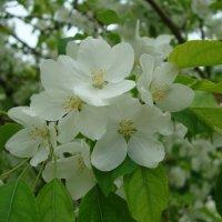 Белый цвет :: марина ковшова