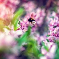 ..наступает время, которое на миг останавливается, чтобы насладится цветением.. :: Лилия .