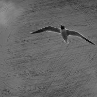 Преодолевая турбулентность! :: Laborant Григоров