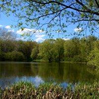 Майская свежая зелень отражается в водной глади пруда - это чудо! :: Ольга Русанова (olg-rusanowa2010)