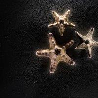 Морские звёзды :: Roamer Pon