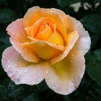 Дождливая весна :: Павел Руденко