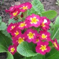 Городские цветы :: Дмитрий Никитин