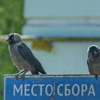 Место сбора :: Михаил Полыгалов