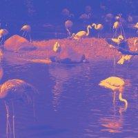 Сиреневый сон фламинго :: Nina Yudicheva