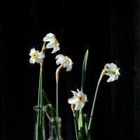 Цветы глядят с тоской влюбленной,  безгрешно чисты, как весна. :: Наталья Казанцева