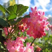 Запах смородины :: spm62 Baiakhcheva Svetlana