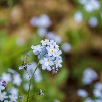 Комарик в цветах! :: Павел Качанов