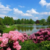 Парк цветов в мае (серия). Красота майского парка :: Nina Yudicheva