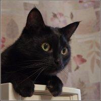 Баська.. Просто кот... :: Николай Панов