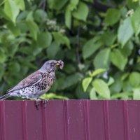 Ещё бы знать наверняка что за птица на нашем заборе.... :: Михаил Полыгалов