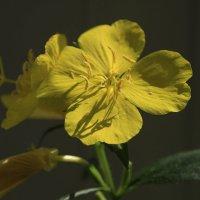про.. цветочки :: оксана