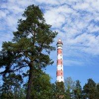 Осиновецкий маяк :: Елена Павлова (Смолова)