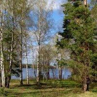 лесная тишина берегом реки... :: Валентина. .
