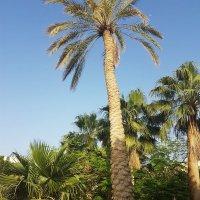 В мире финиковых пальм. :: Жанна Викторовна