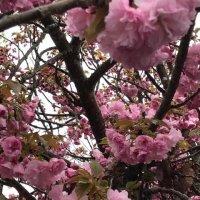 Красота весны :: Елена
