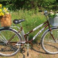 Я буду долго гнать велосипед.... :: ВАЛЕНТИНА ИВАНОВА