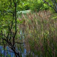 Озеро Малое Борково. Японский стиль. :: Клиентова Алиса