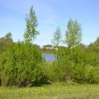 Весна у озера. :: zoja