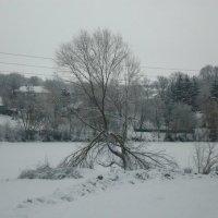 Дерево у озера :: Сергей