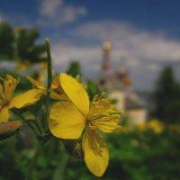 Желтое на зеленом... :: Павел Зюзин