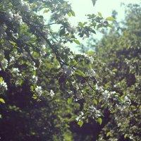Сады :: Юля Грек