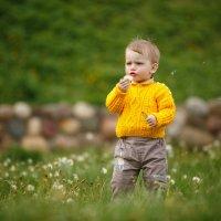 Мальчик - одуванчик :: Ольга Челышева