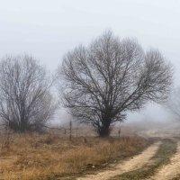 дорога в туман :: Михаил