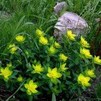 Цветы на клумбе . :: Мила Бовкун