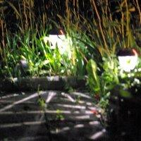 Ночью в саду :: Игорь Шубовичь