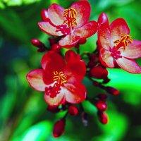 Весенний Цвет :: Aleks Ben Israel