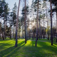В парке :: Алексей Игнатьев