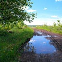 После майского ливня.. :: Андрей Заломленков