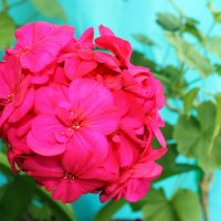 Мои цветочки. :: Валентина ツ ღ✿ღ