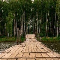 лес :: Валерия Ширковцова