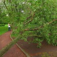 Не все пострадали от урагана :: Андрей Лукьянов