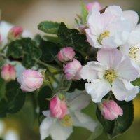 Весна :: Александр Яковлев