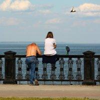Любовь и голуби :: Анатолий Шулков